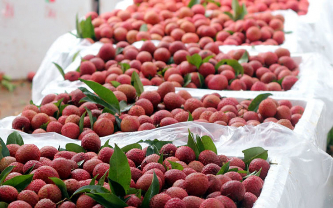 Lychee is exported to the EU under EVFTA.