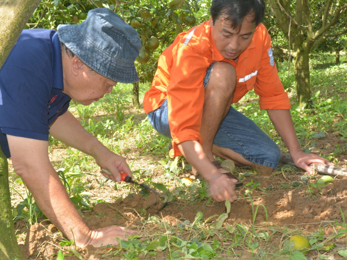 IPHM's 'One Health' approach goes into the whole of solutions that not only ensure pest and disease control for plants, but also harmonize with human health, the environment, and biodiversity. Photo: Le Tan.