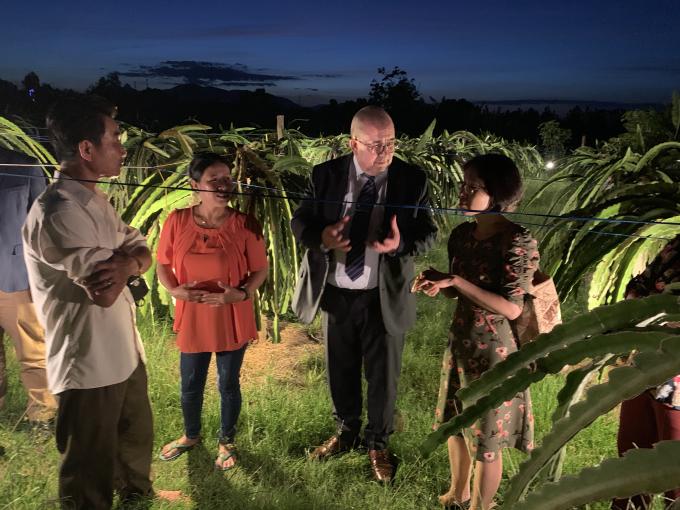 Mr Ambassador Paul Jansen visits a dragon fruit garden in south central regions of Vietnam, which had received a non refundable project from Belgium.