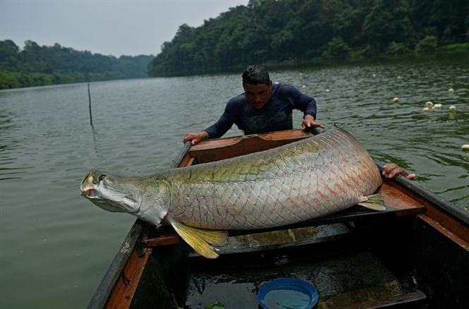 11-16-12_fishermen-lod-recenly-ctched-rpim-lso-known-s-news-photo-1571342243